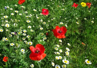 Crisbrook Meadow in Bloom
